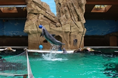 Zoo_Delfin1