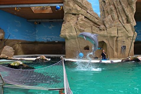 Zoo_Delfin2