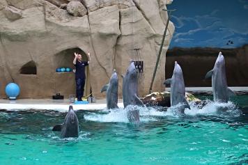 Zoo_Delfin3